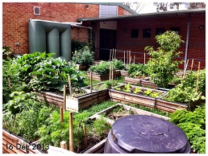 The Bede Polding Eco Group transformed a patch of unused school lawn into a low-budget garden using recycled resources.